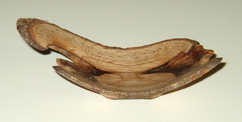 wood turning angel wing image